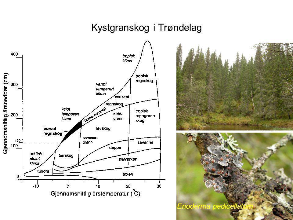Kystgranskog i Trøndelag