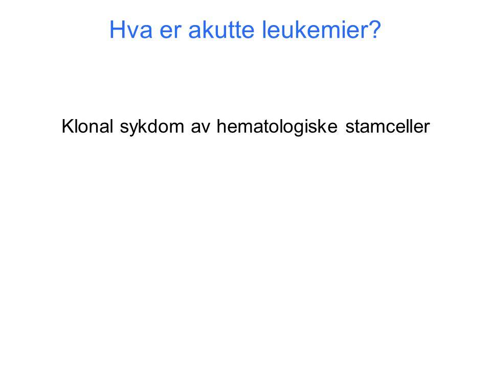 Hva er akutte leukemier