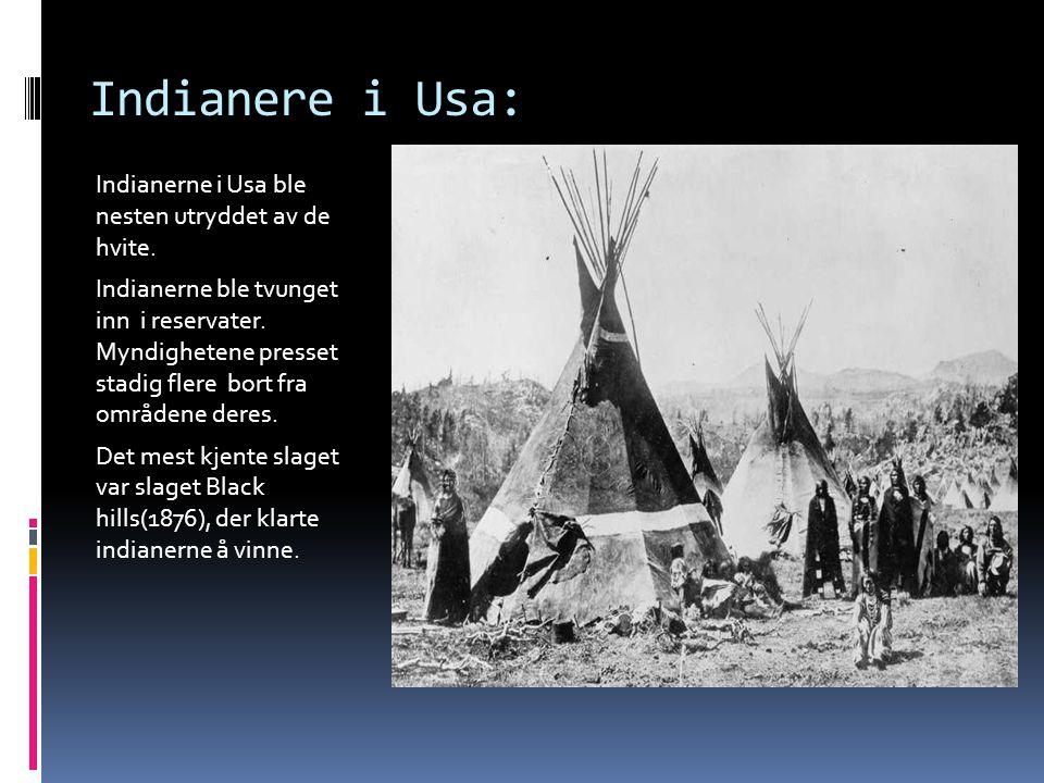 Indianere i Usa: Indianerne i Usa ble nesten utryddet av de hvite.