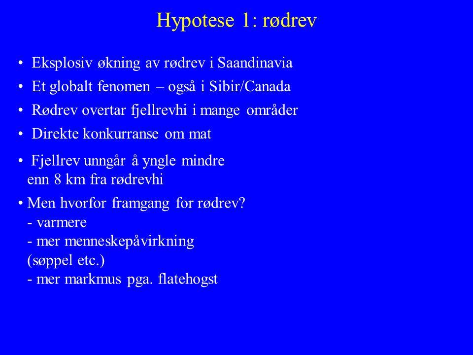 Hypotese 1: rødrev Eksplosiv økning av rødrev i Saandinavia