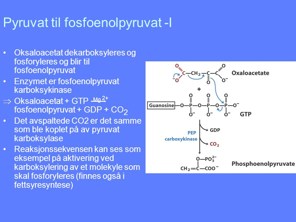 Pyruvat til fosfoenolpyruvat -I