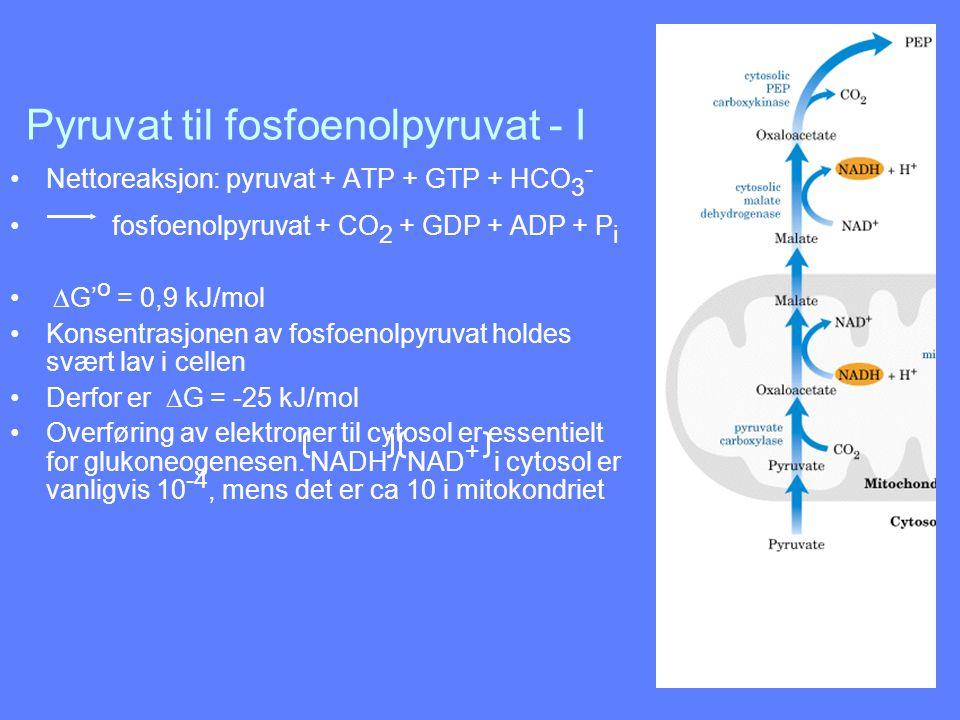 Pyruvat til fosfoenolpyruvat - I