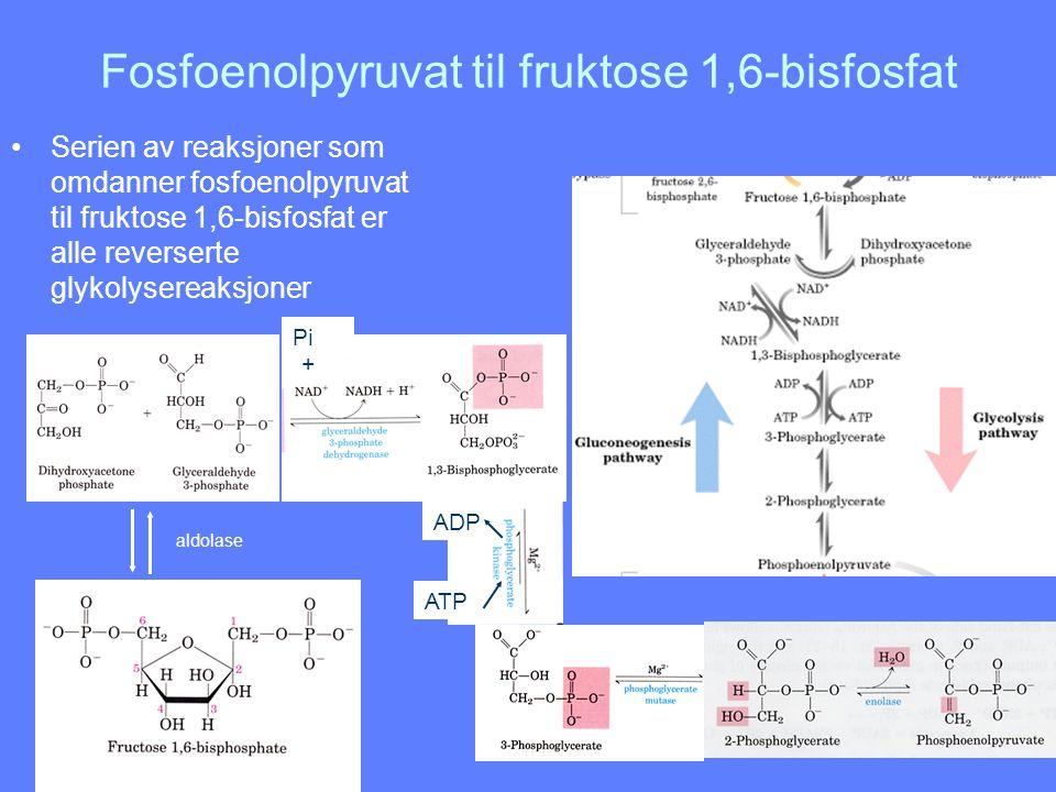 Fosfoenolpyruvat til fruktose 1,6-bisfosfat