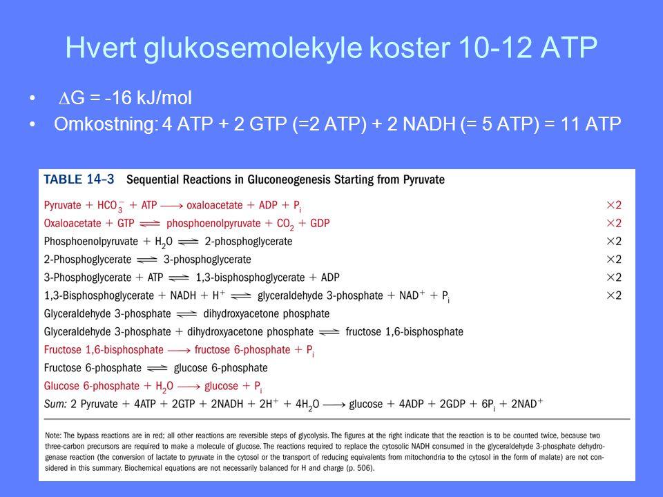 Hvert glukosemolekyle koster 10-12 ATP