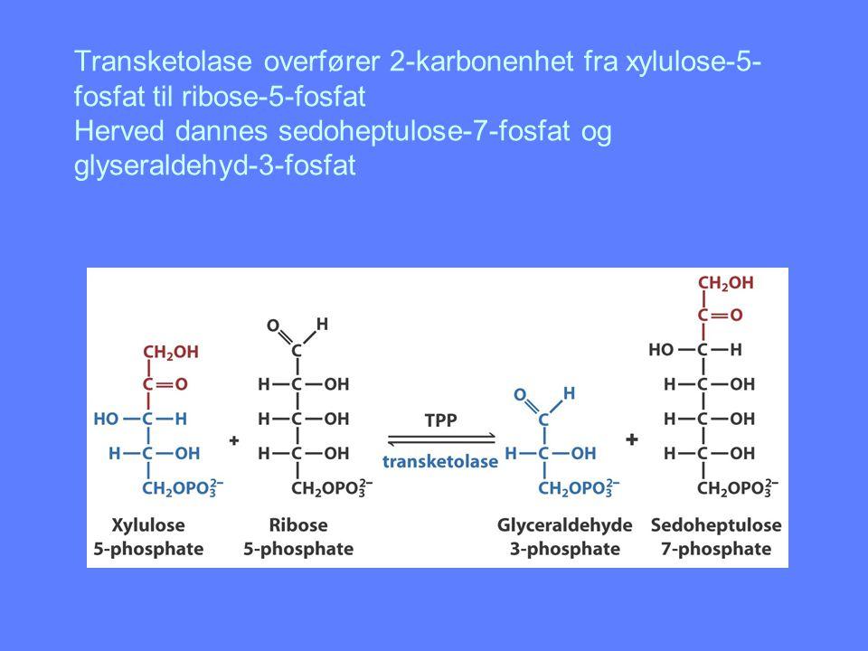 Transketolase overfører 2-karbonenhet fra xylulose-5-fosfat til ribose-5-fosfat Herved dannes sedoheptulose-7-fosfat og glyseraldehyd-3-fosfat