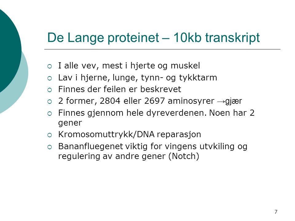 De Lange proteinet – 10kb transkript