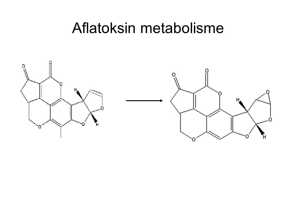 Aflatoksin metabolisme