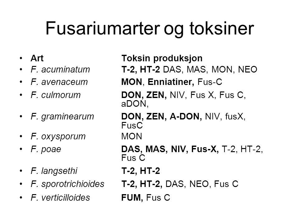 Fusariumarter og toksiner