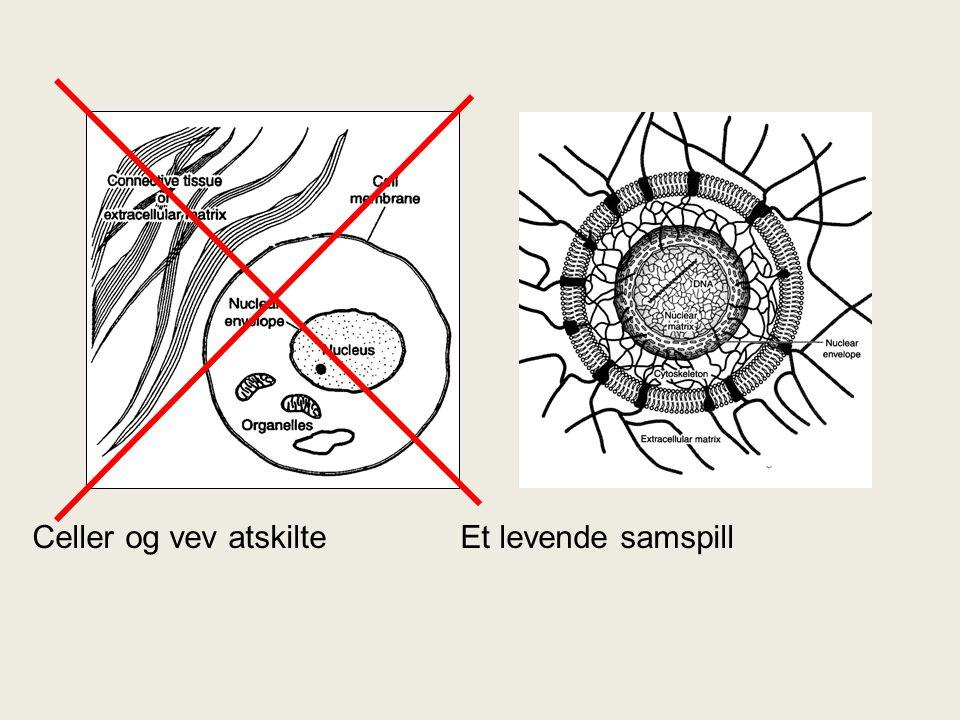 Celler og vev atskilte Et levende samspill