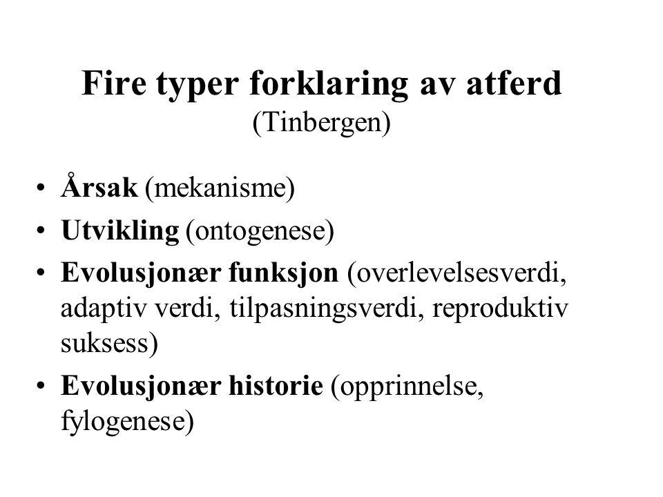 Fire typer forklaring av atferd (Tinbergen)