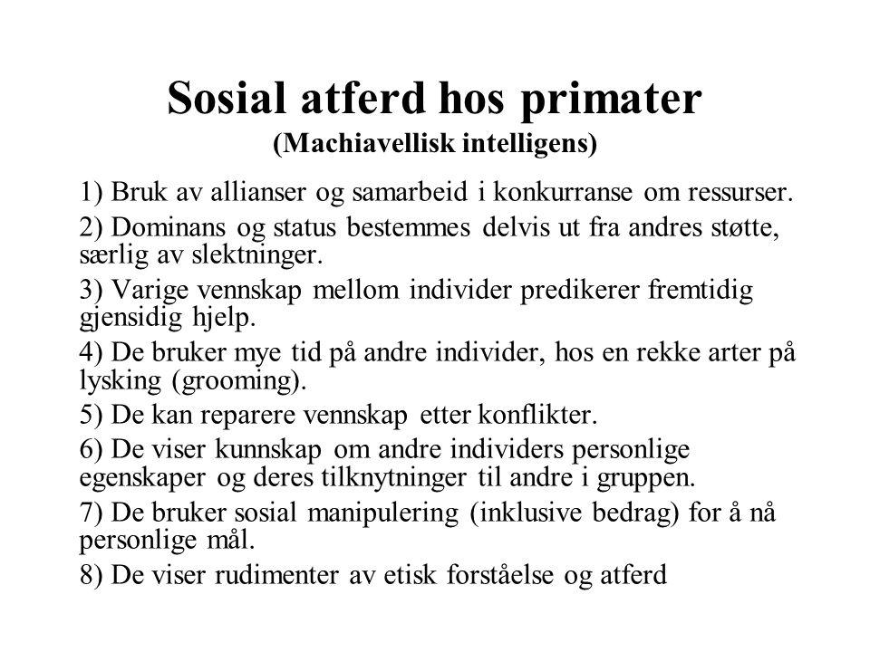 Sosial atferd hos primater (Machiavellisk intelligens)