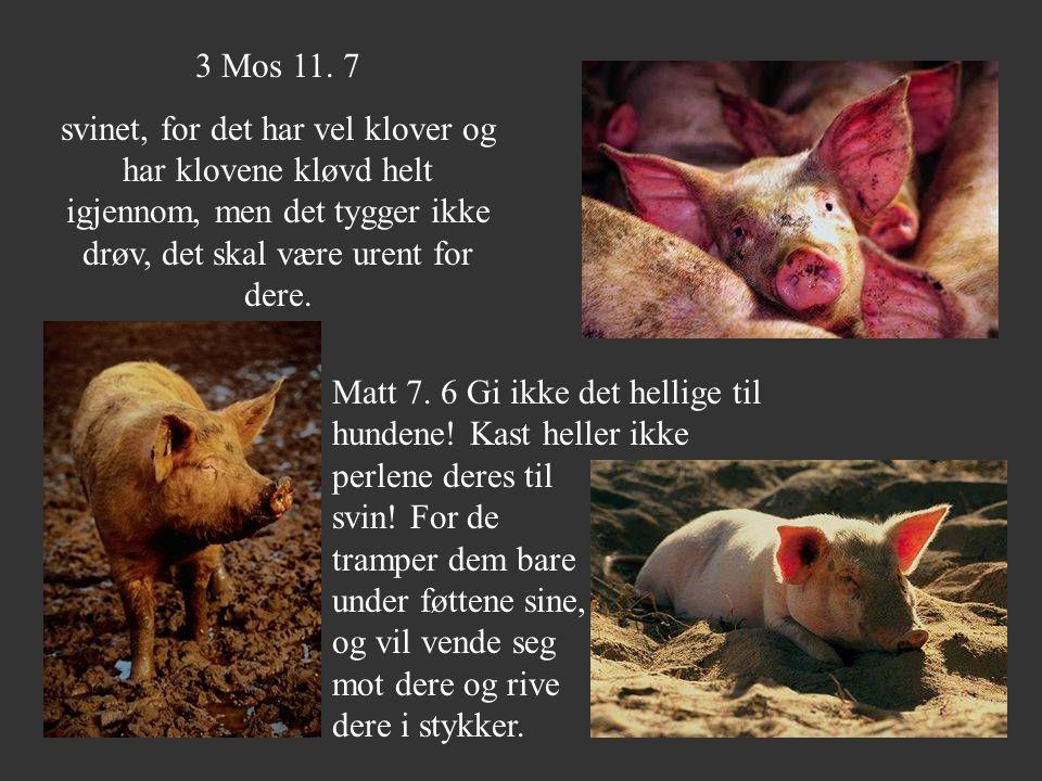 3 Mos 11. 7 svinet, for det har vel klover og har klovene kløvd helt igjennom, men det tygger ikke drøv, det skal være urent for dere.