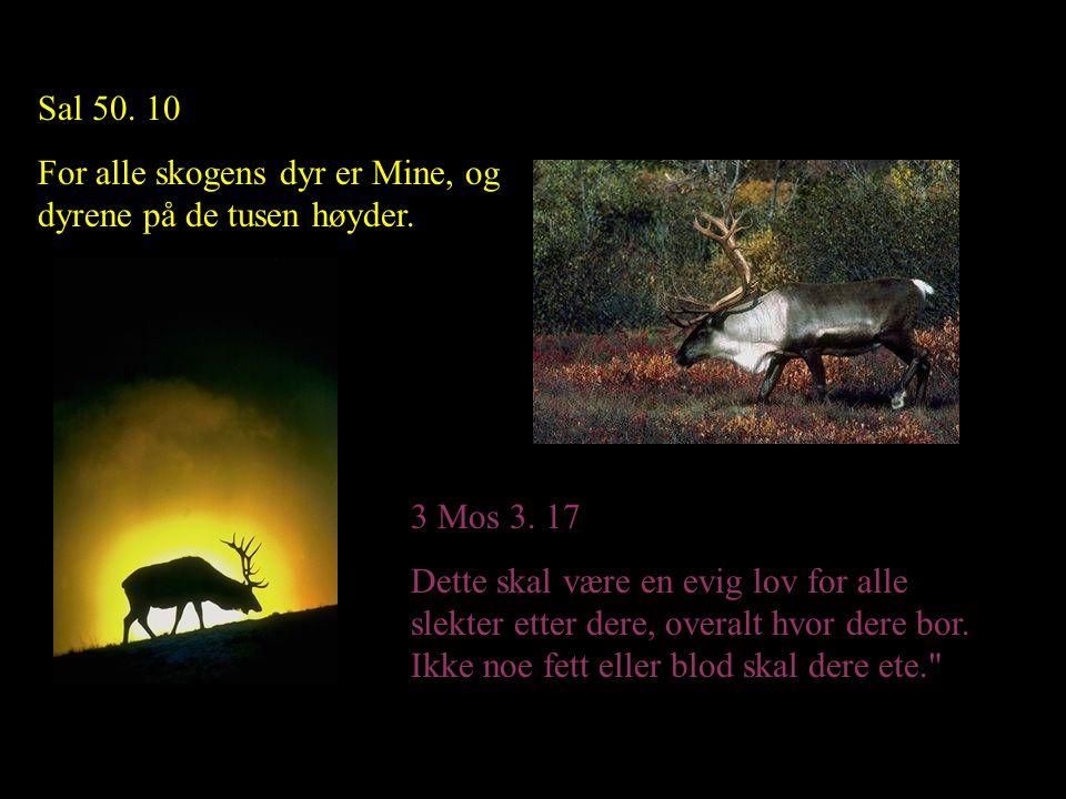 Sal 50. 10 For alle skogens dyr er Mine, og dyrene på de tusen høyder. 3 Mos 3. 17.