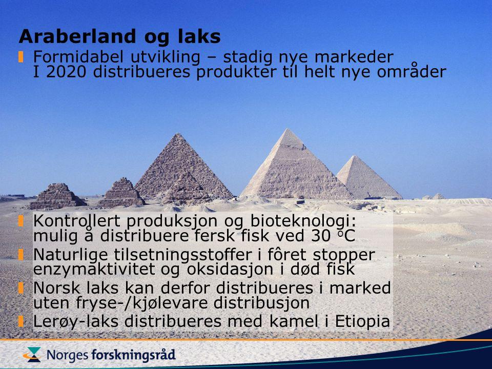 Araberland og laks Formidabel utvikling – stadig nye markeder I 2020 distribueres produkter til helt nye områder.