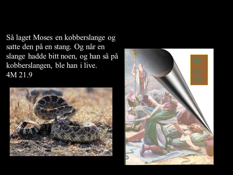 Så laget Moses en kobberslange og satte den på en stang