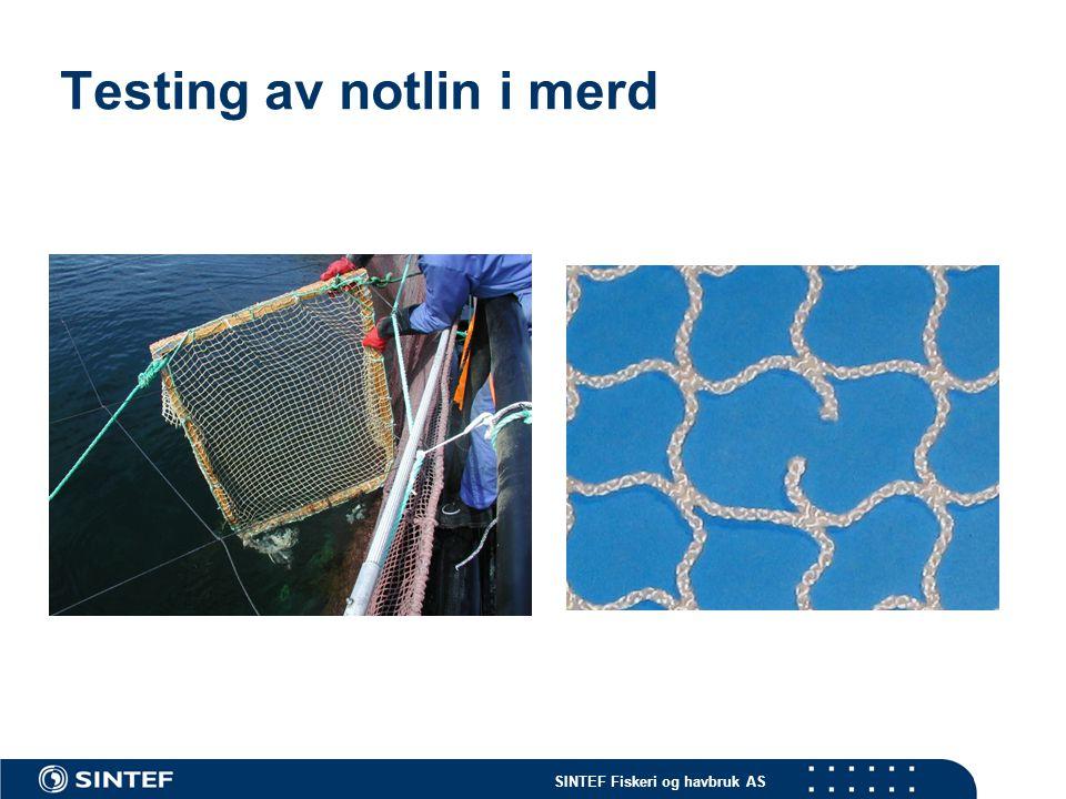 Testing av notlin i merd