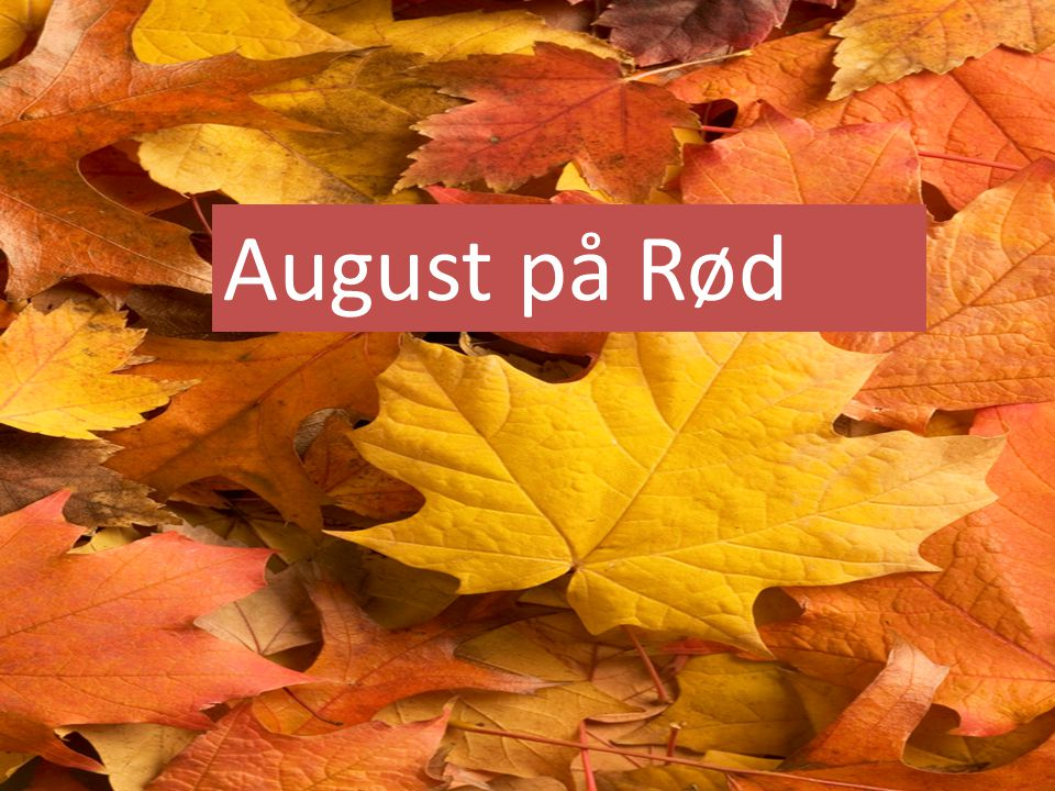 August på Rød