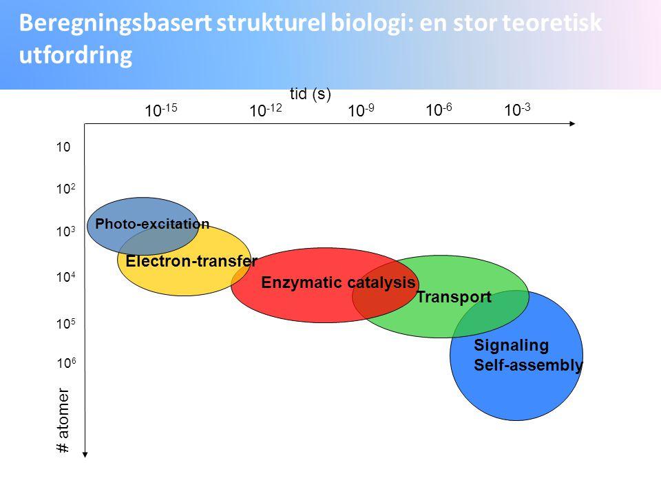 Beregningsbasert strukturel biologi: en stor teoretisk utfordring