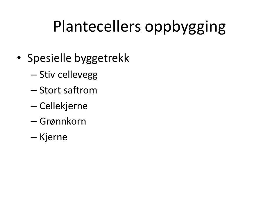 Plantecellers oppbygging