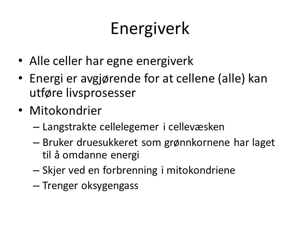 Energiverk Alle celler har egne energiverk