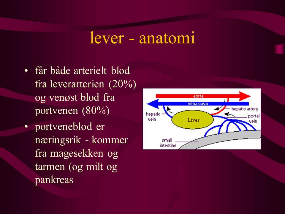 lever - anatomi får både arterielt blod fra leverarterien (20%) og venøst blod fra portvenen (80%)