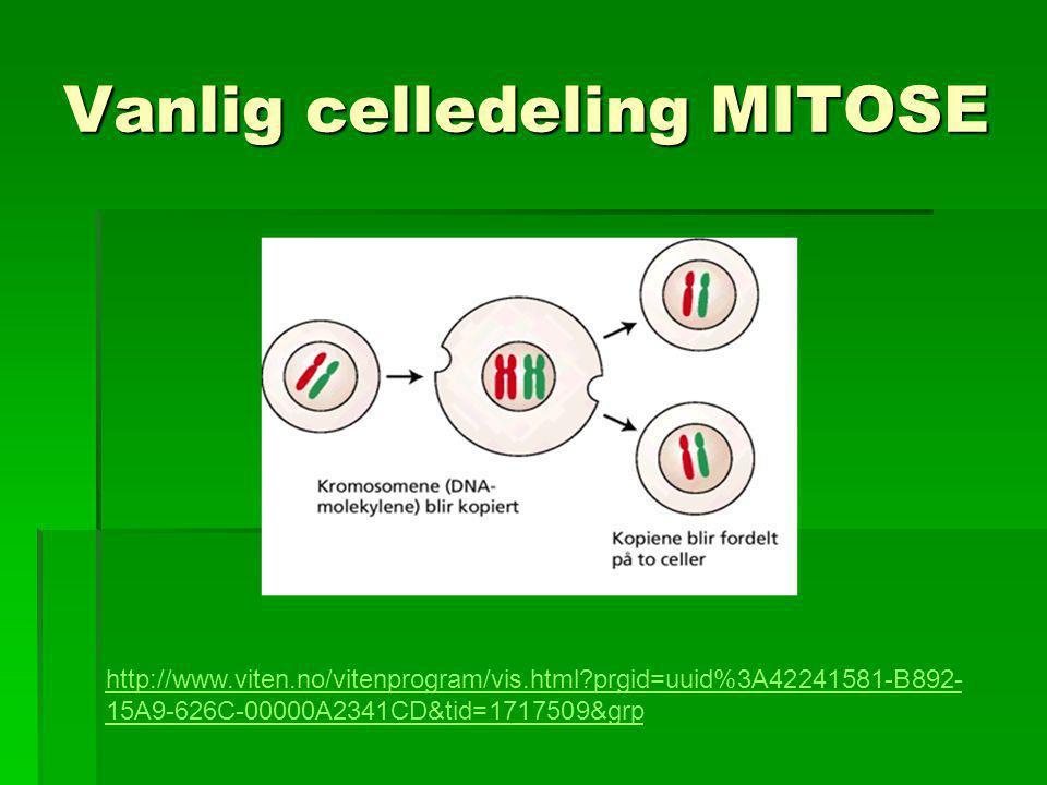 Vanlig celledeling MITOSE