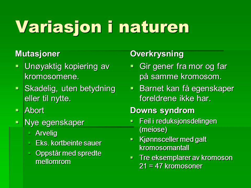 Variasjon i naturen Mutasjoner Overkrysning