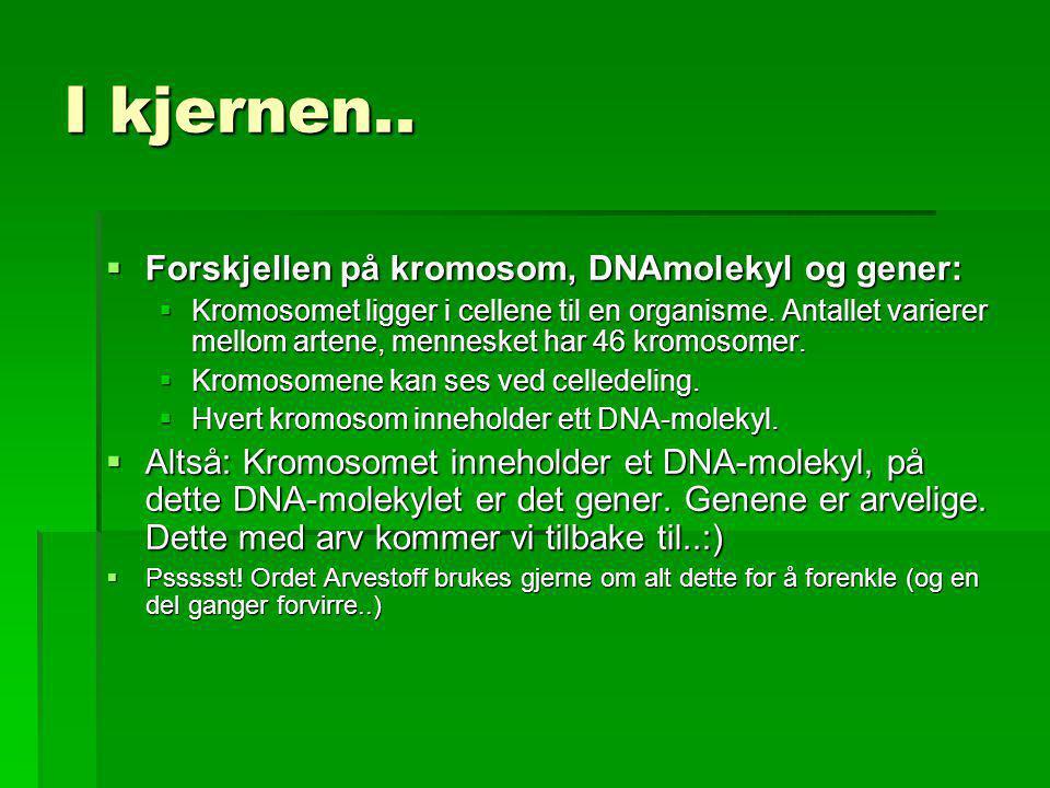 I kjernen.. Forskjellen på kromosom, DNAmolekyl og gener: