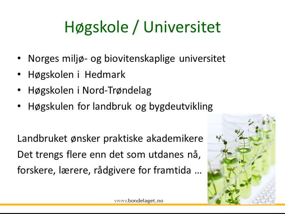 Høgskole / Universitet