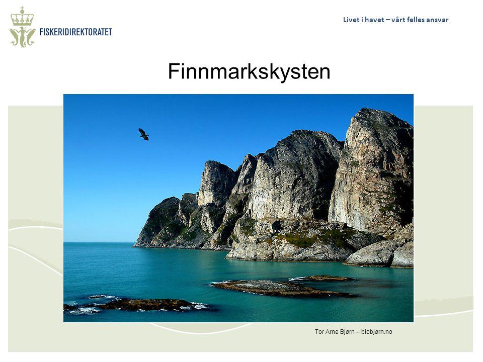 Finnmarkskysten Tor Arne Bjørn – biobjørn.no