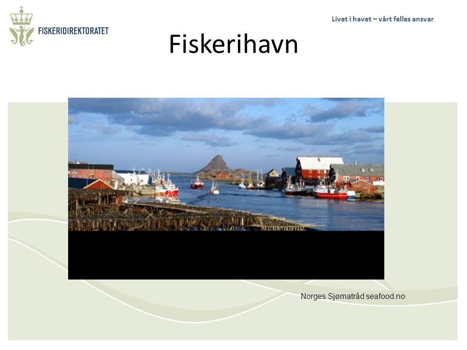 Fiskerihavn Norges Sjømatråd seafood.no