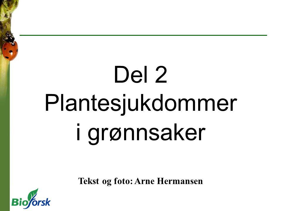 Tekst og foto: Arne Hermansen