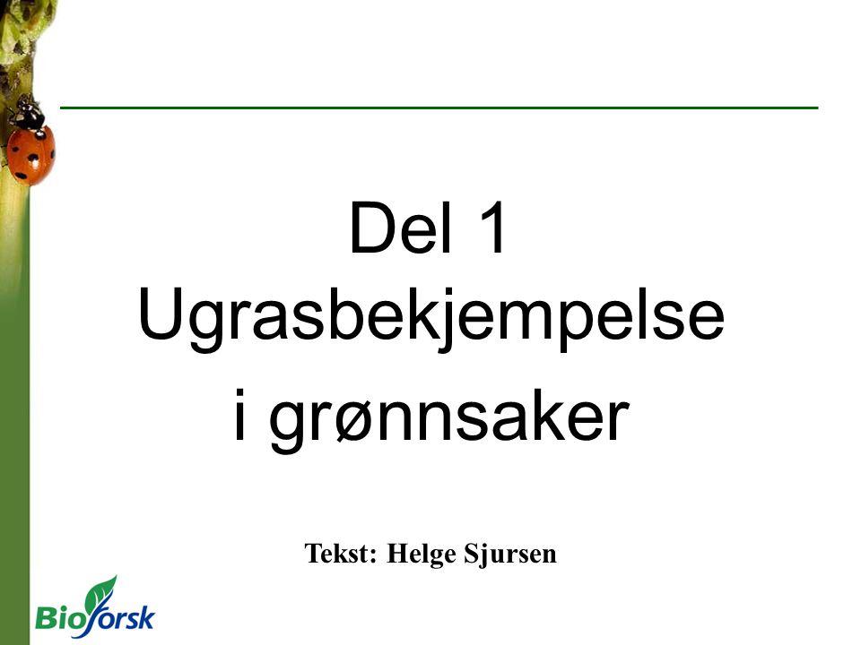 Del 1 Ugrasbekjempelse i grønnsaker Tekst: Helge Sjursen
