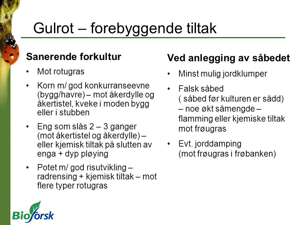 Gulrot – forebyggende tiltak