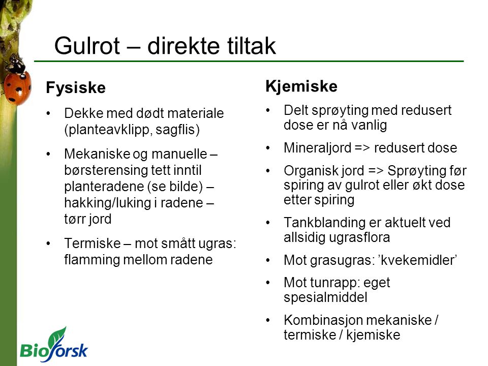 Gulrot – direkte tiltak
