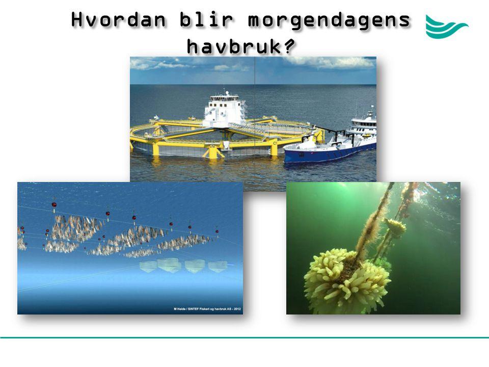 Hvordan blir morgendagens havbruk