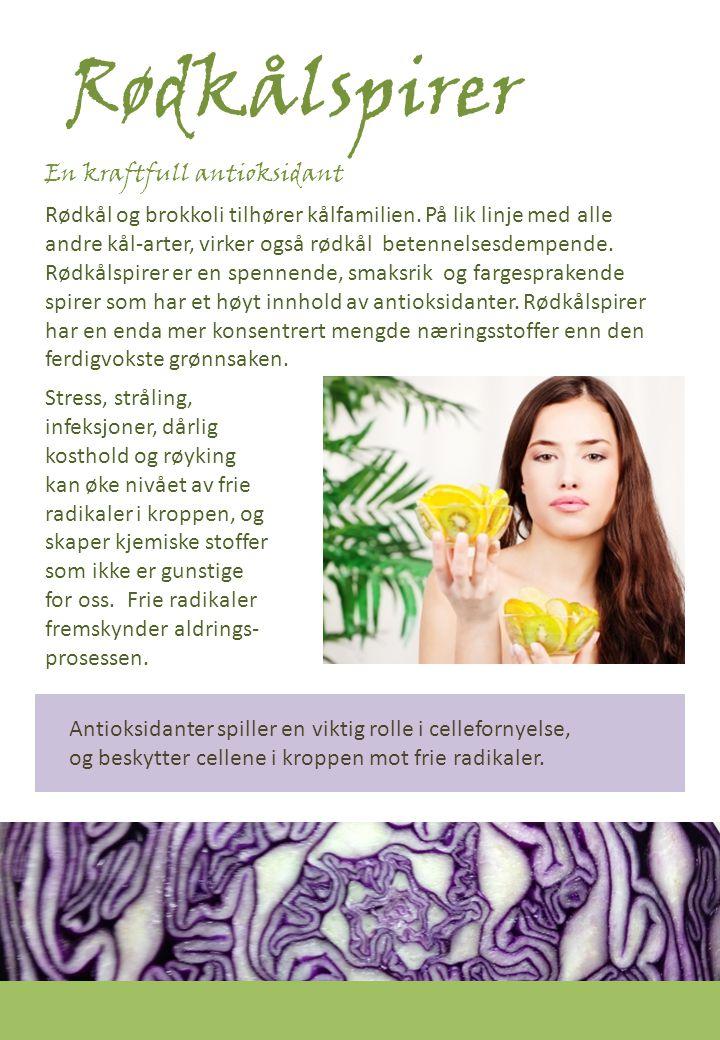 Rødkålspirer Rødkål- En kraftfull antioksidant