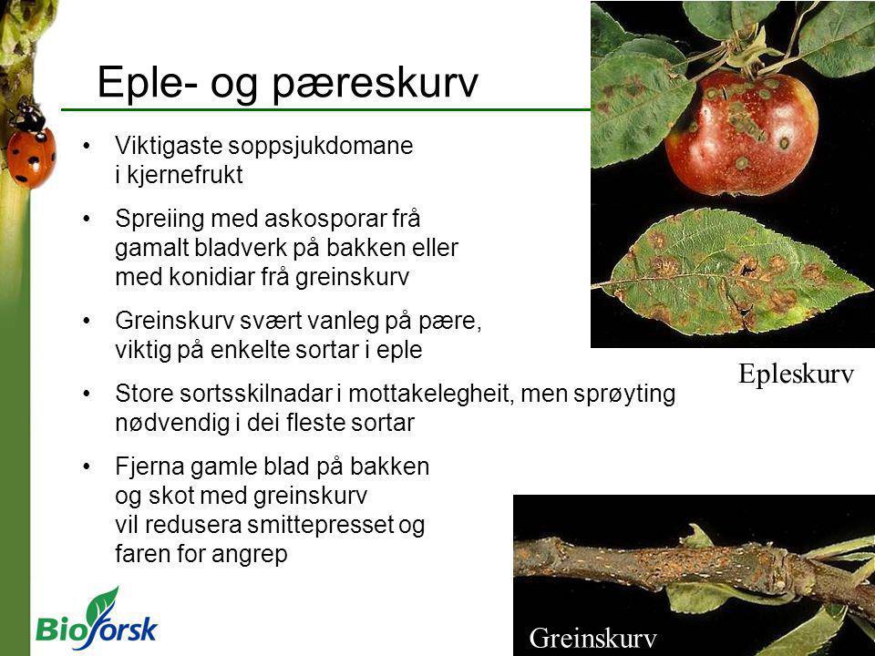 Eple- og pæreskurv Epleskurv Greinskurv