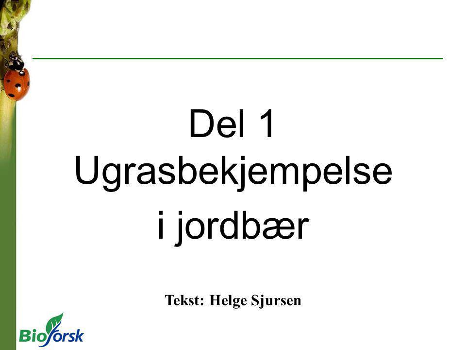 Del 1 Ugrasbekjempelse i jordbær Tekst: Helge Sjursen