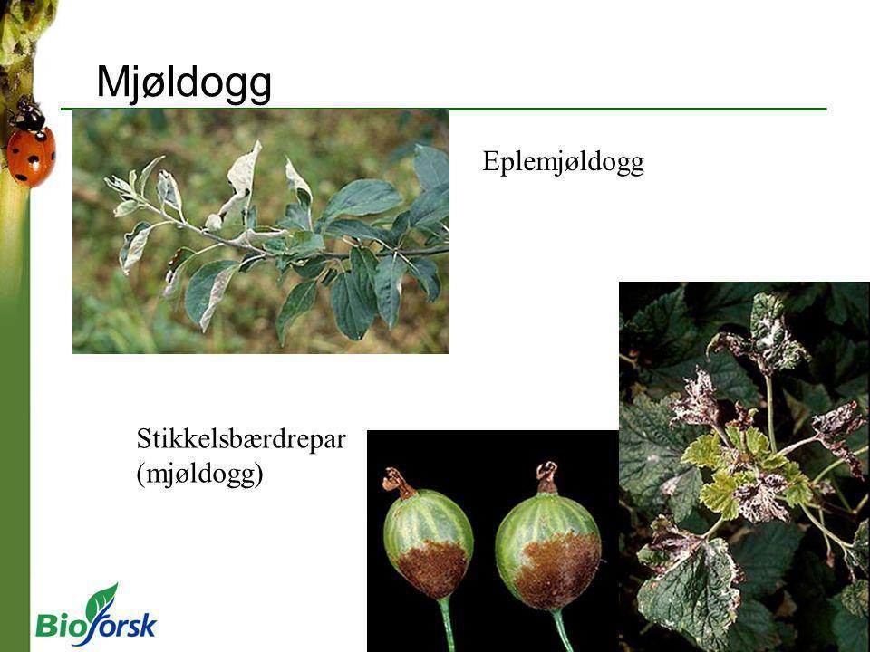 Mjøldogg Eplemjøldogg Stikkelsbærdrepar (mjøldogg)