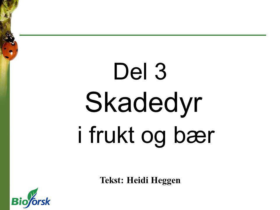 Del 3 Skadedyr i frukt og bær Tekst: Heidi Heggen