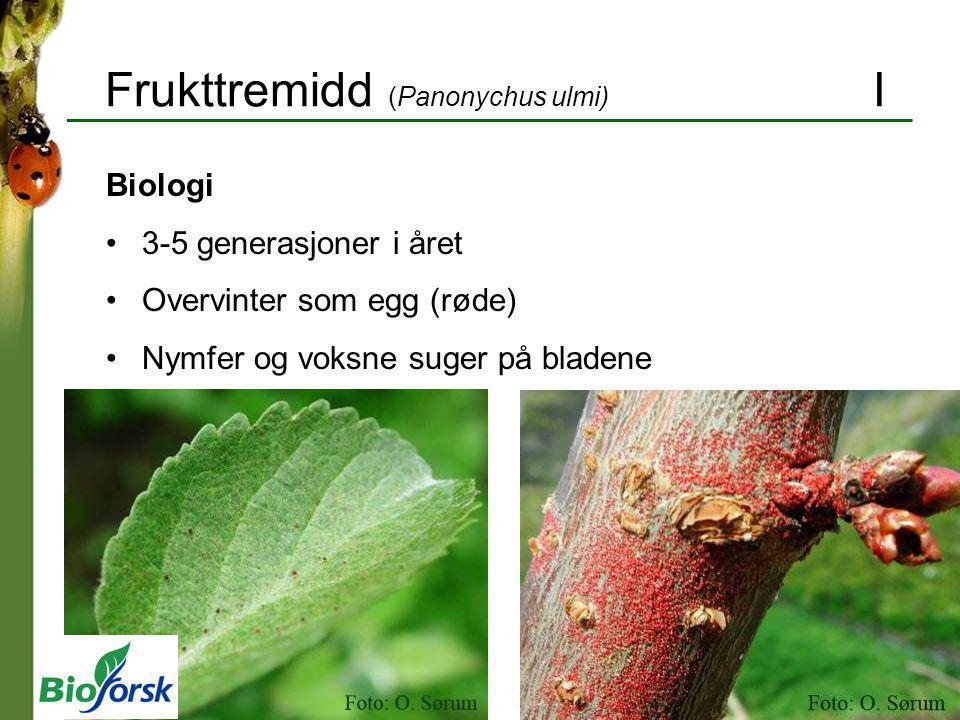 Frukttremidd (Panonychus ulmi) I