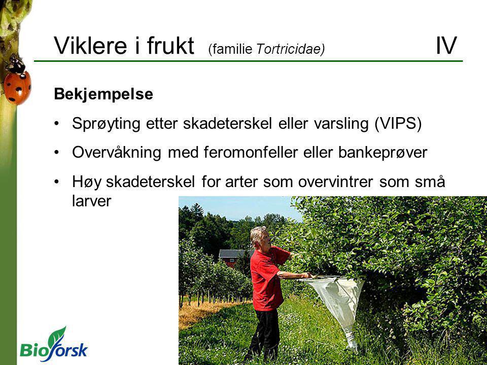 Viklere i frukt (familie Tortricidae) IV