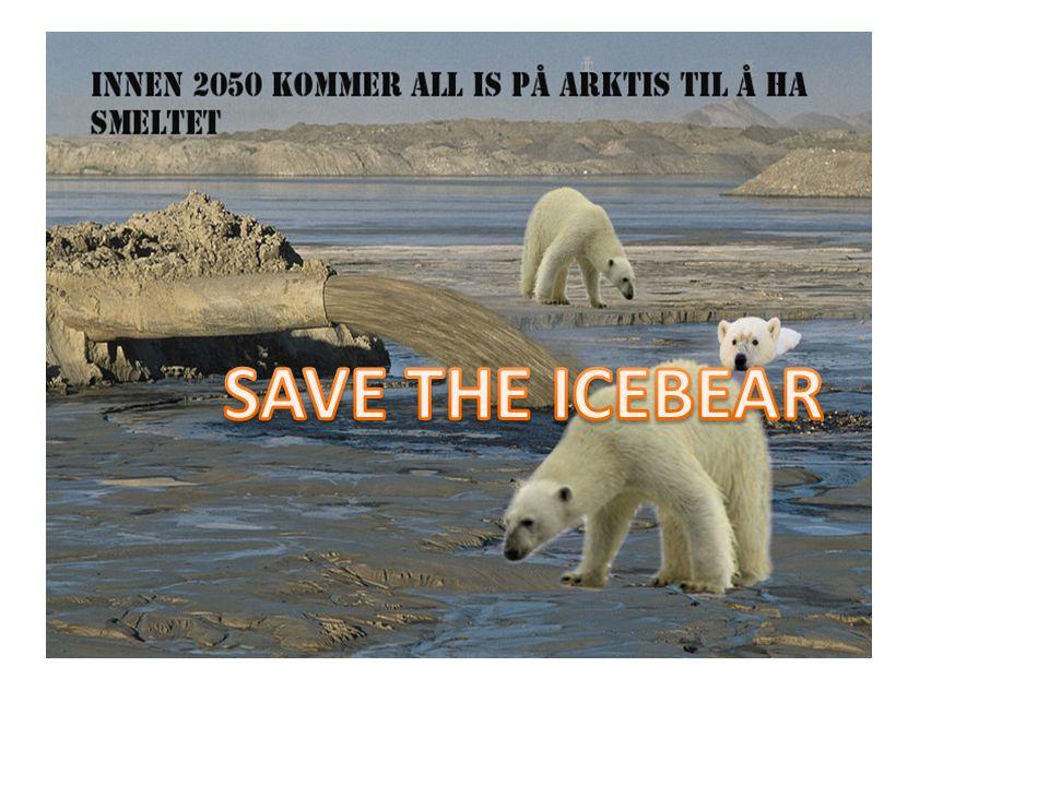 SAVE THE ICEBEAR .