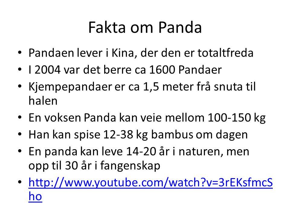 Fakta om Panda Pandaen lever i Kina, der den er totaltfreda