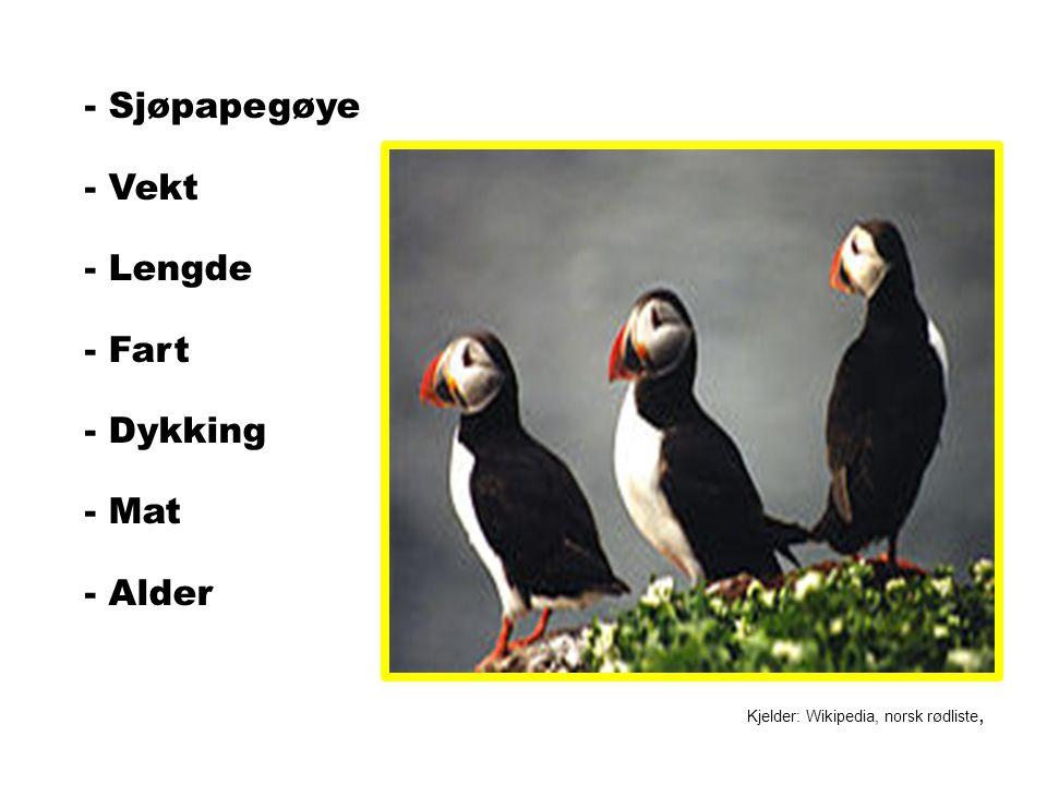 - Sjøpapegøye - Vekt - Lengde - Fart - Dykking - Mat - Alder