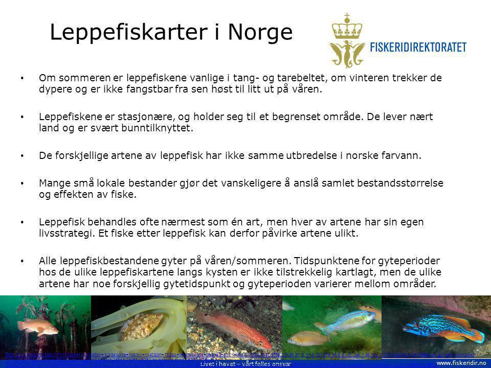 Leppefiskarter i Norge