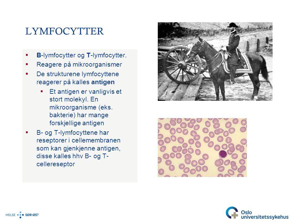 LYMFOCYTTER B-lymfocytter og T-lymfocytter. Reagere på mikroorganismer