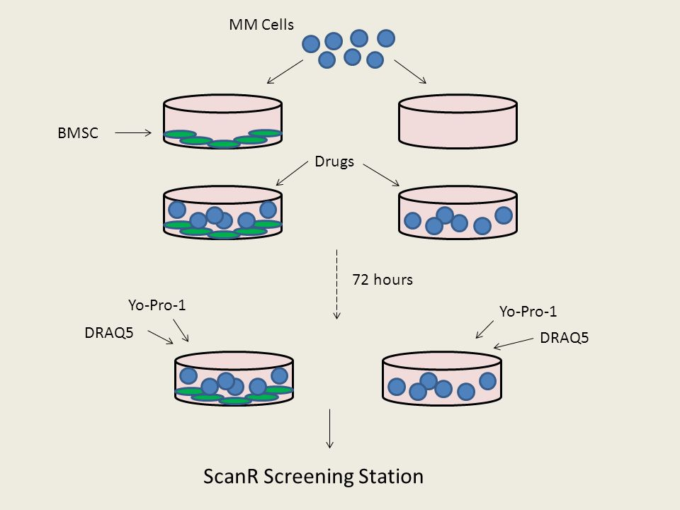 ScanR Screening Station