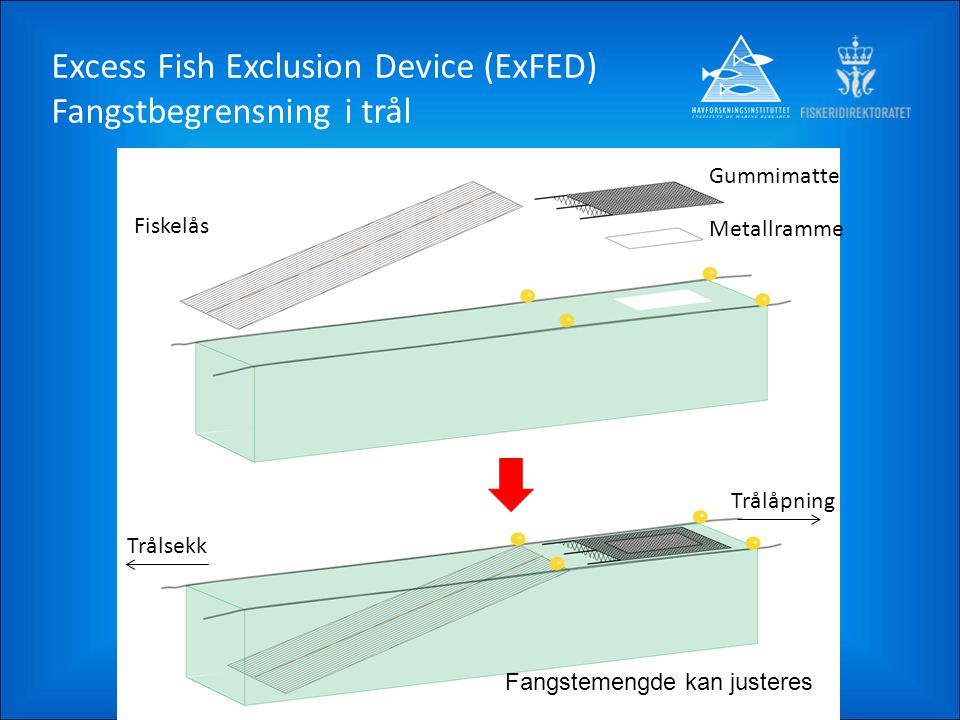 Excess Fish Exclusion Device (ExFED) Fangstbegrensning i trål